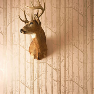 Cole and Son Woods Wallpaper - Whimsical
