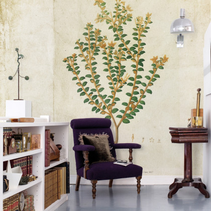 Coordonne Botanical Drawing Mural