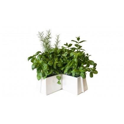 Vitamin X Tray Plant Pot